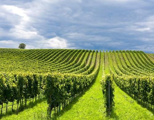Terre di Pisa wine Consortium: from hills to sea, the unexpected Tuscany