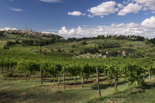 Vernaccia di San Gimignano docg, the White Queen in a land of Red Kings.