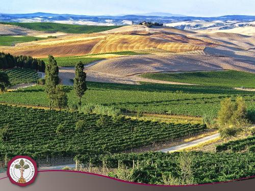 Montalcino, a territory made for wine