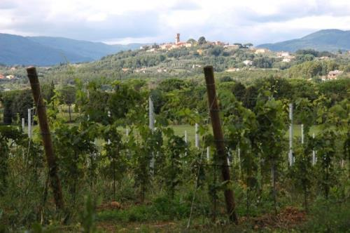 Consorzio vini DOC Montecarlo. The white hill of Tuscany since 1333